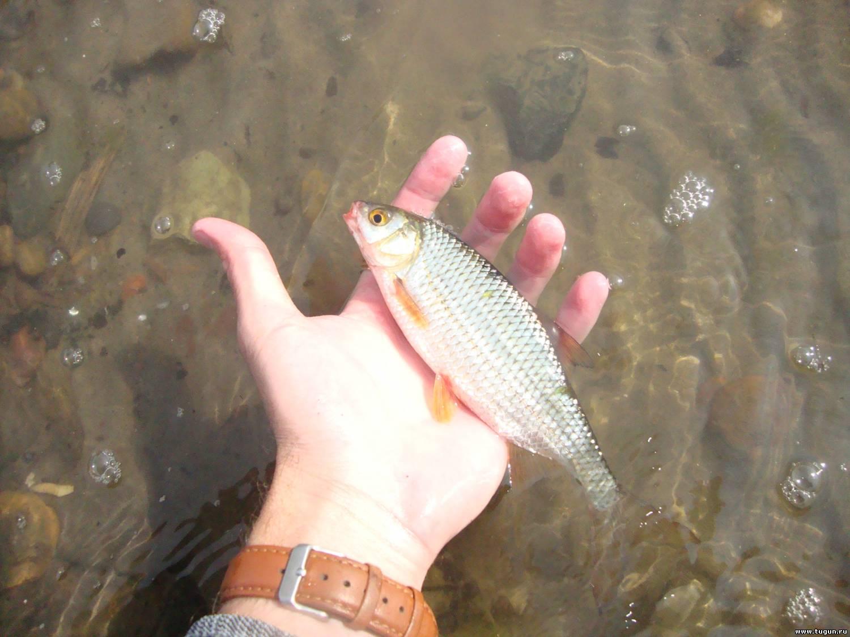 почему сейчас не клюет рыба